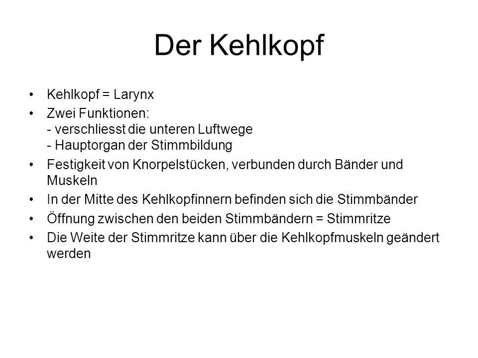 Der Kehlkopf Kehlkopf = Larynx