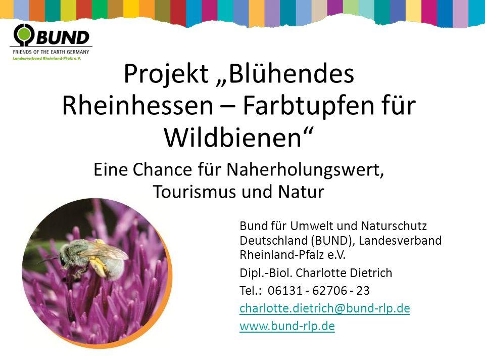 """Projekt """"Blühendes Rheinhessen – Farbtupfen für Wildbienen"""