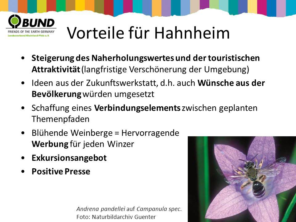 Vorteile für Hahnheim Steigerung des Naherholungswertes und der touristischen Attraktivität (langfristige Verschönerung der Umgebung)