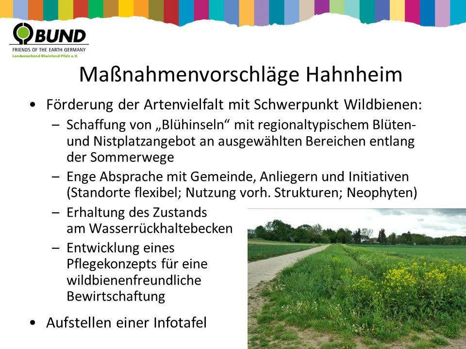 Maßnahmenvorschläge Hahnheim