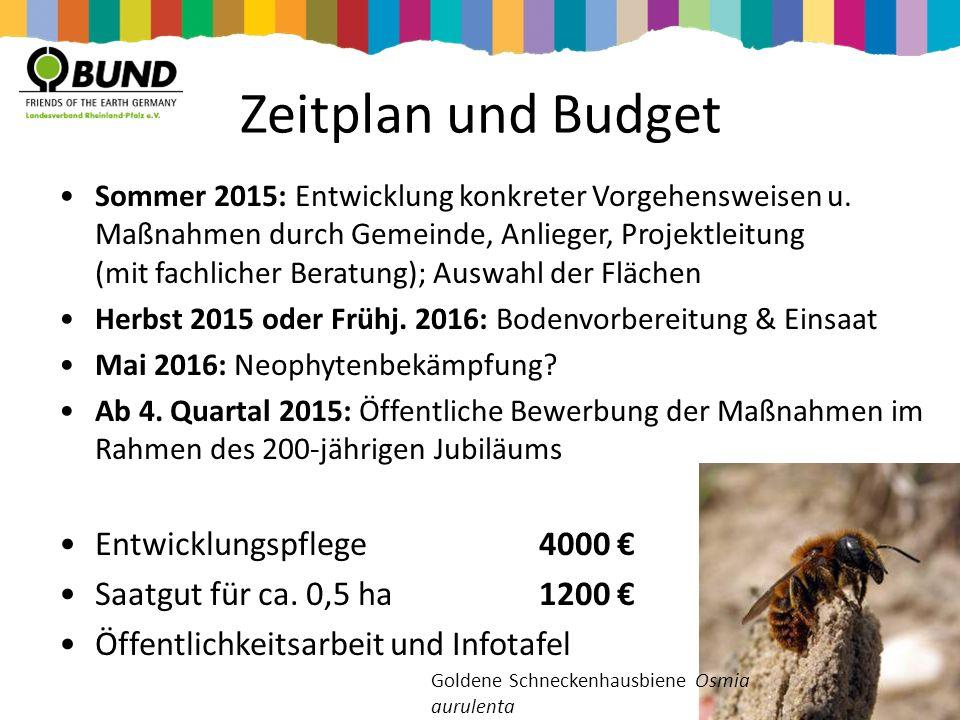 Zeitplan und Budget Entwicklungspflege 4000 €