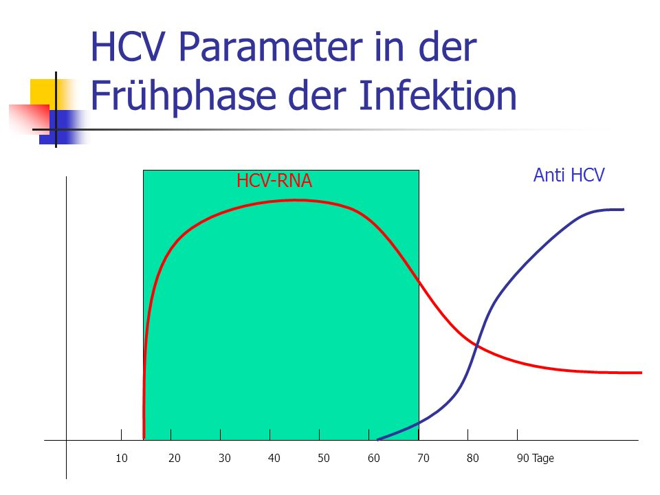 HCV Parameter in der Frühphase der Infektion