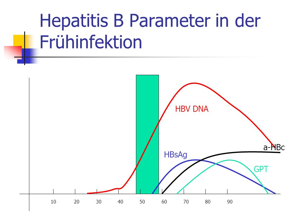 Hepatitis B Parameter in der Frühinfektion