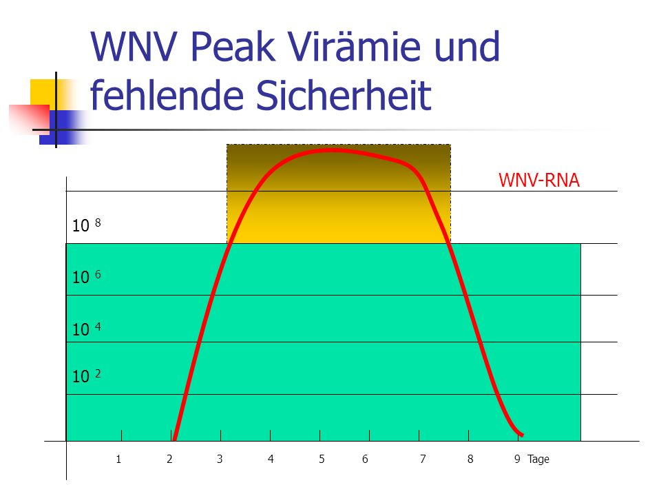 WNV Peak Virämie und fehlende Sicherheit