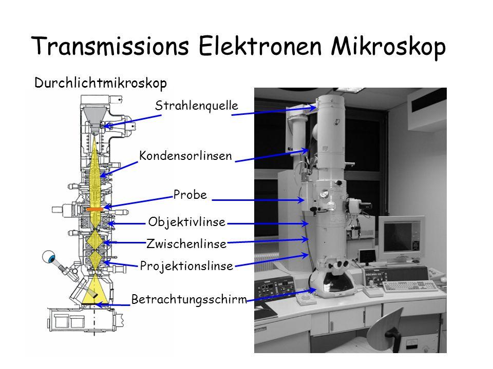 Transmissions Elektronen Mikroskop
