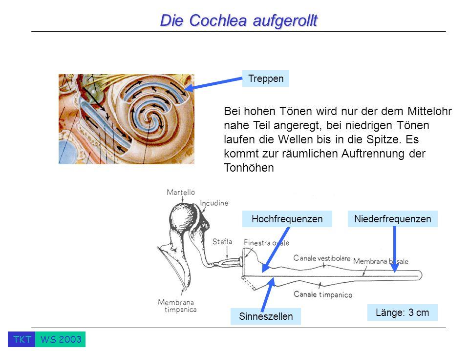 Die Cochlea aufgerollt