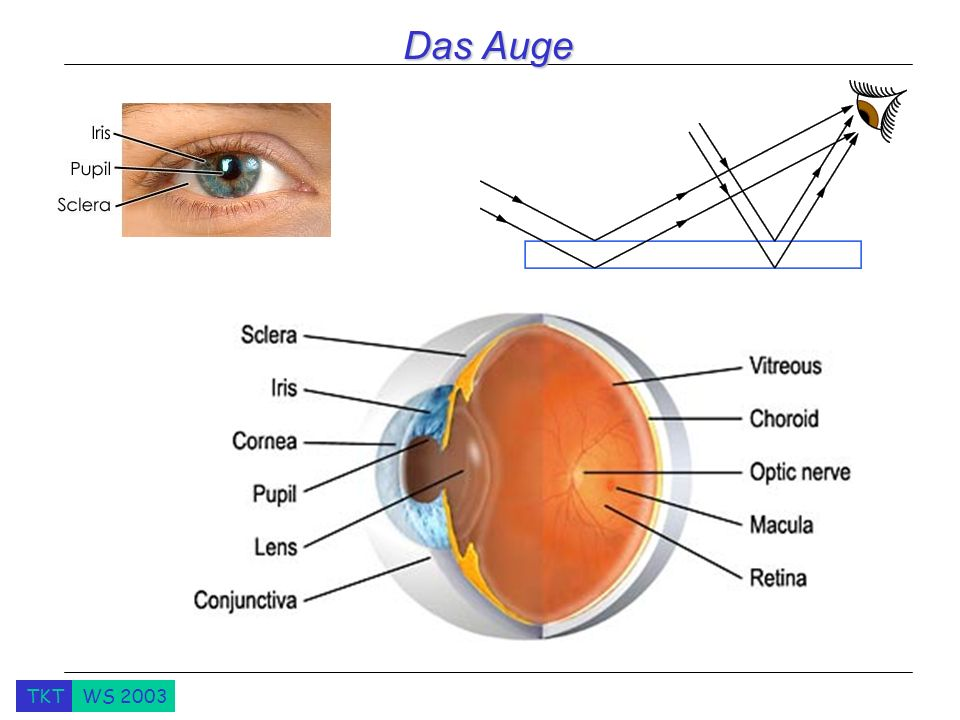 Das Auge What happens when you change the period. Why the first sounds terrible.