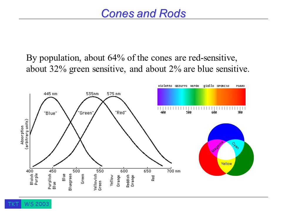 Cones and Rods By population, about 64% of the cones are red-sensitive, about 32% green sensitive, and about 2% are blue sensitive.