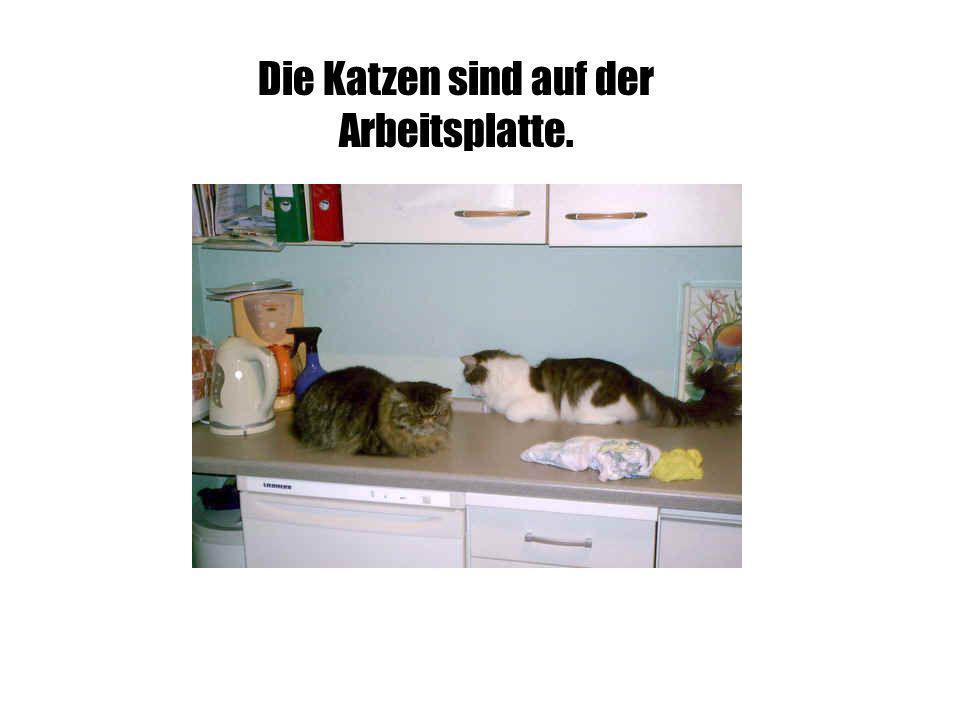 Die Katzen sind auf der Arbeitsplatte.