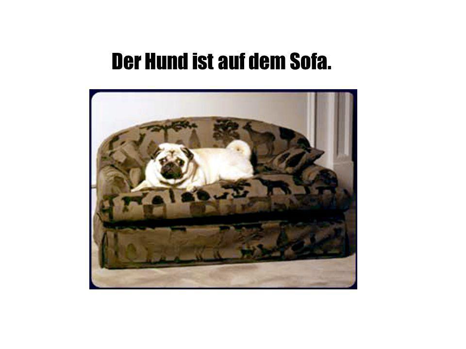 Der Hund ist auf dem Sofa.