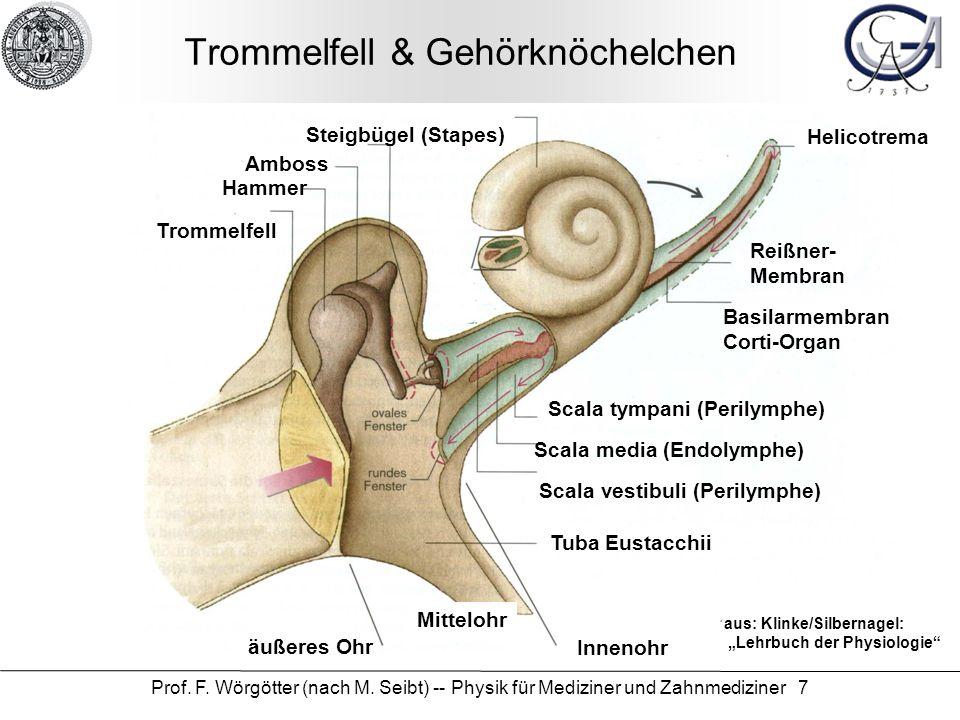 Charmant Ohrmuschel Des Ohrs Anatomie Ideen - Anatomie Ideen ...