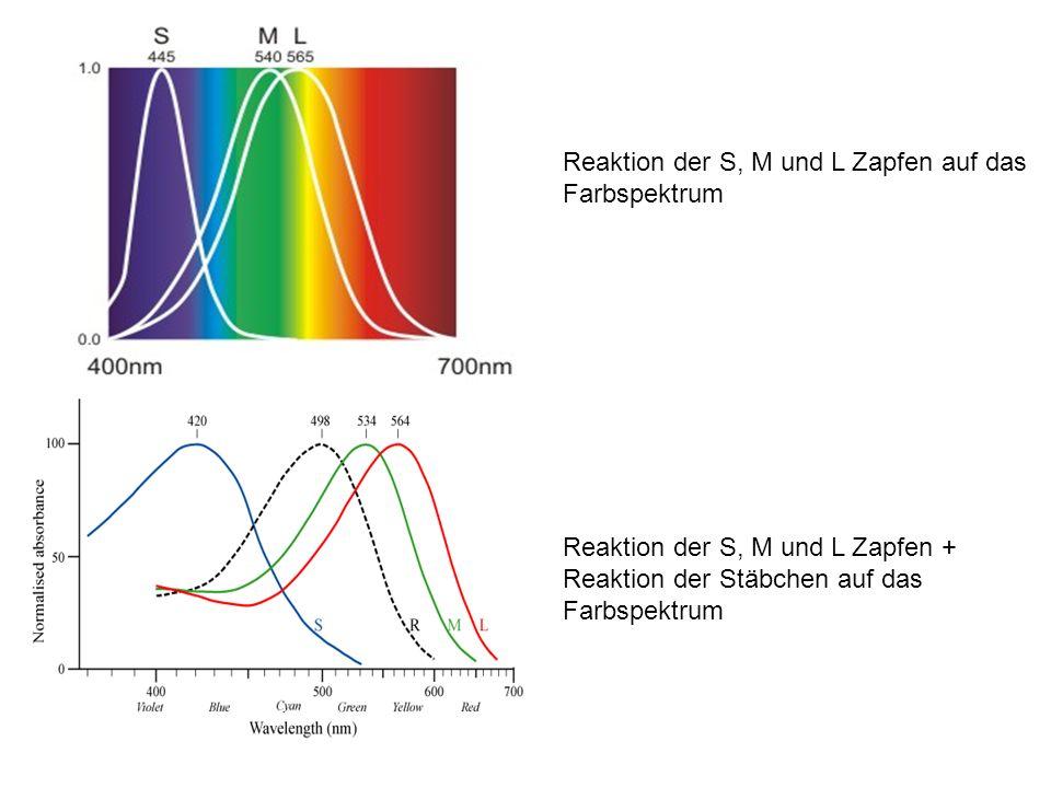 Reaktion der S, M und L Zapfen auf das Farbspektrum