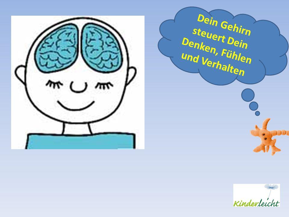 Dein Gehirn steuert Dein Denken, Fühlen und Verhalten
