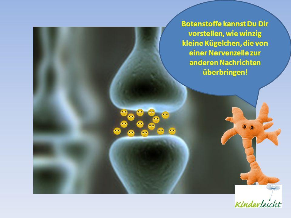 Botenstoffe kannst Du Dir vorstellen, wie winzig kleine Kügelchen, die von einer Nervenzelle zur anderen Nachrichten überbringen!