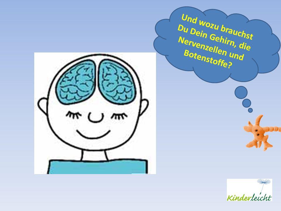 Und wozu brauchst Du Dein Gehirn, die Nervenzellen und Botenstoffe