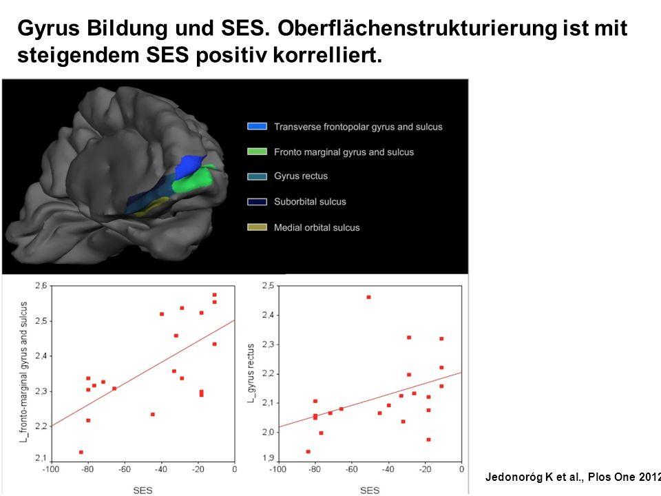 Gyrus Bildung und SES. Oberflächenstrukturierung ist mit steigendem SES positiv korrelliert.