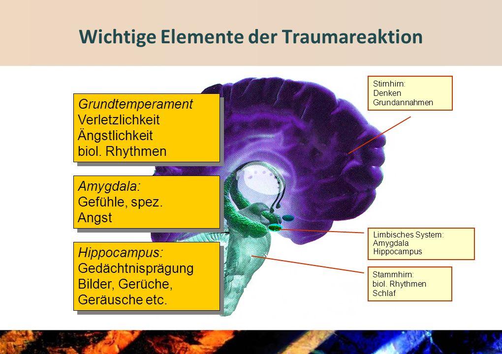 Wichtige Elemente der Traumareaktion
