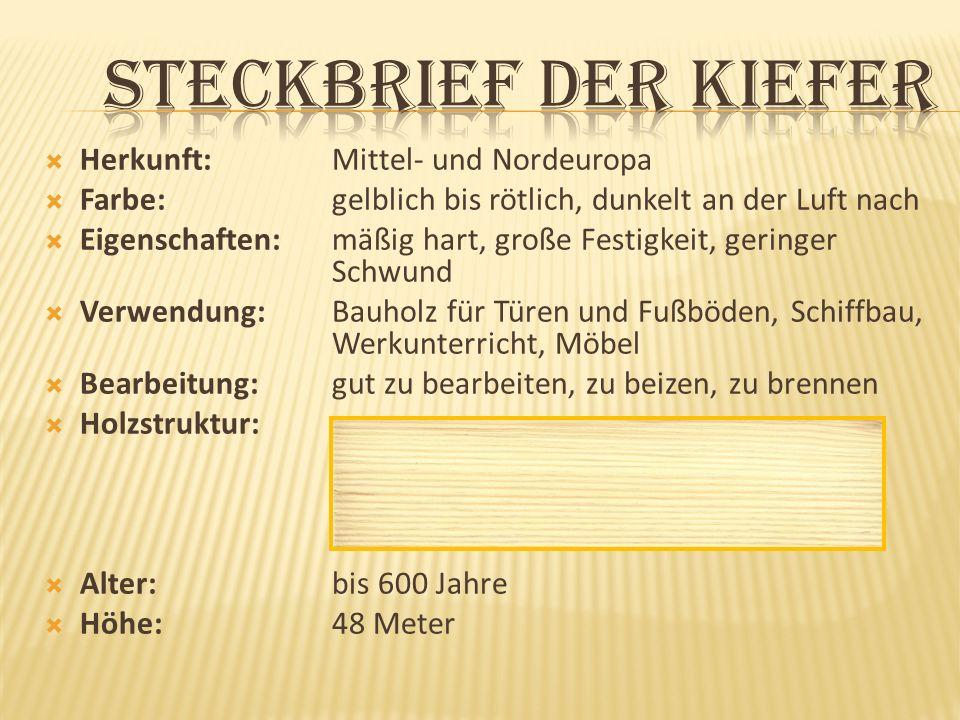 Steckbrief der Kiefer Herkunft: Mittel- und Nordeuropa