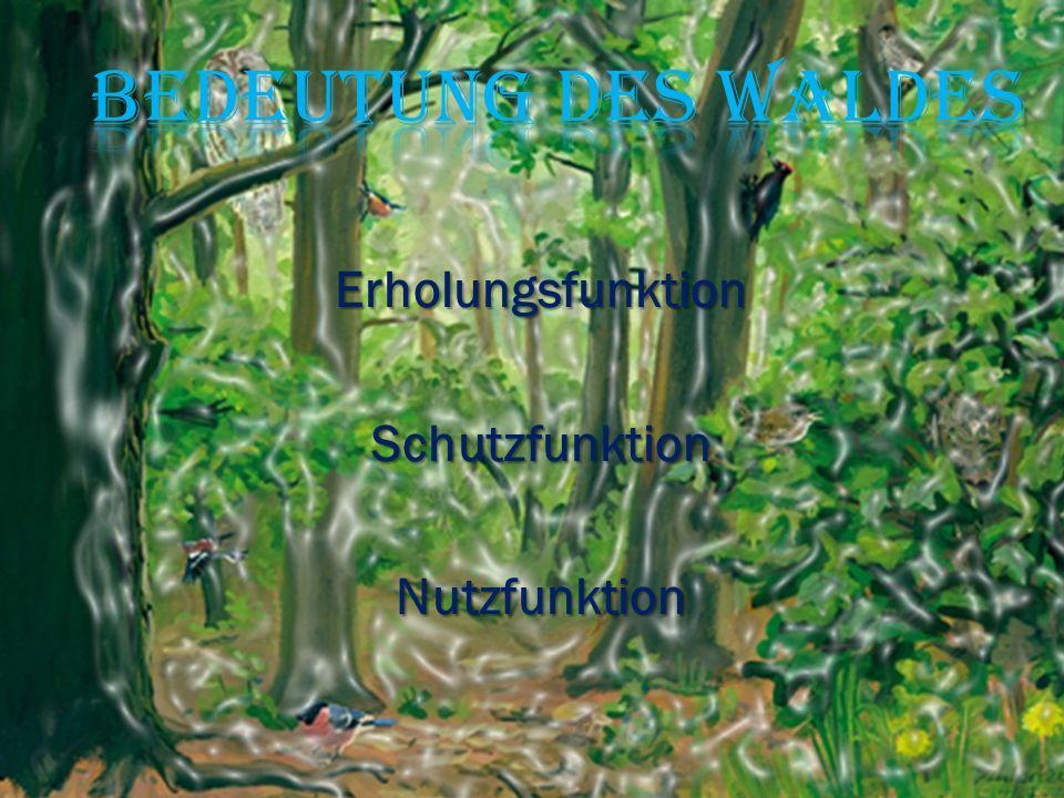 Bedeutung des Waldes Erholungsfunktion Schutzfunktion Nutzfunktion