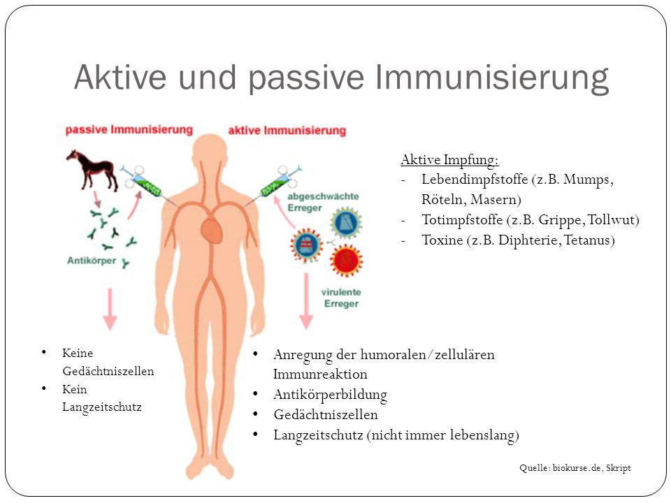 Aktive und passive Immunisierung