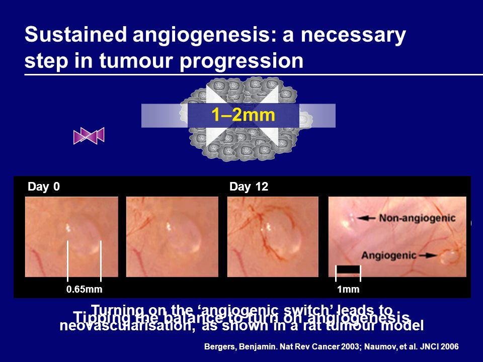 Sustained angiogenesis: a necessary step in tumour progression