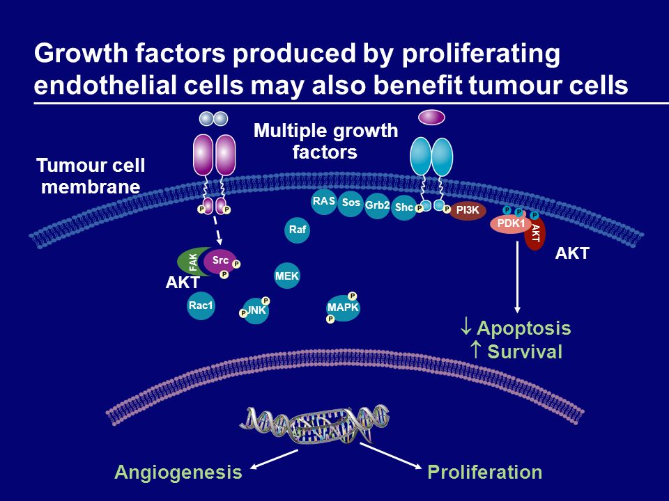 Multiple growth factors