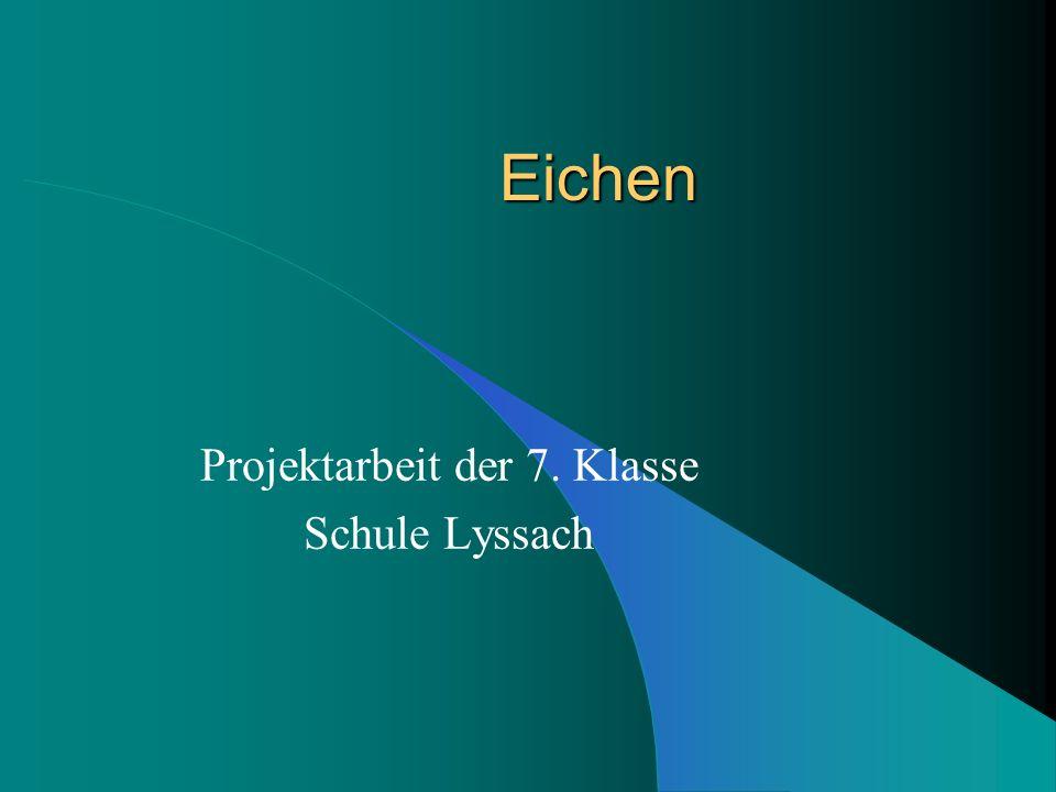 Projektarbeit der 7. Klasse Schule Lyssach
