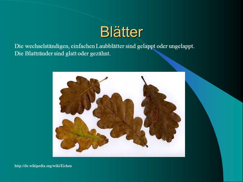 Blätter Die wechselständigen, einfachen Laubblätter sind gelappt oder ungelappt. Die Blattränder sind glatt oder gezähnt.