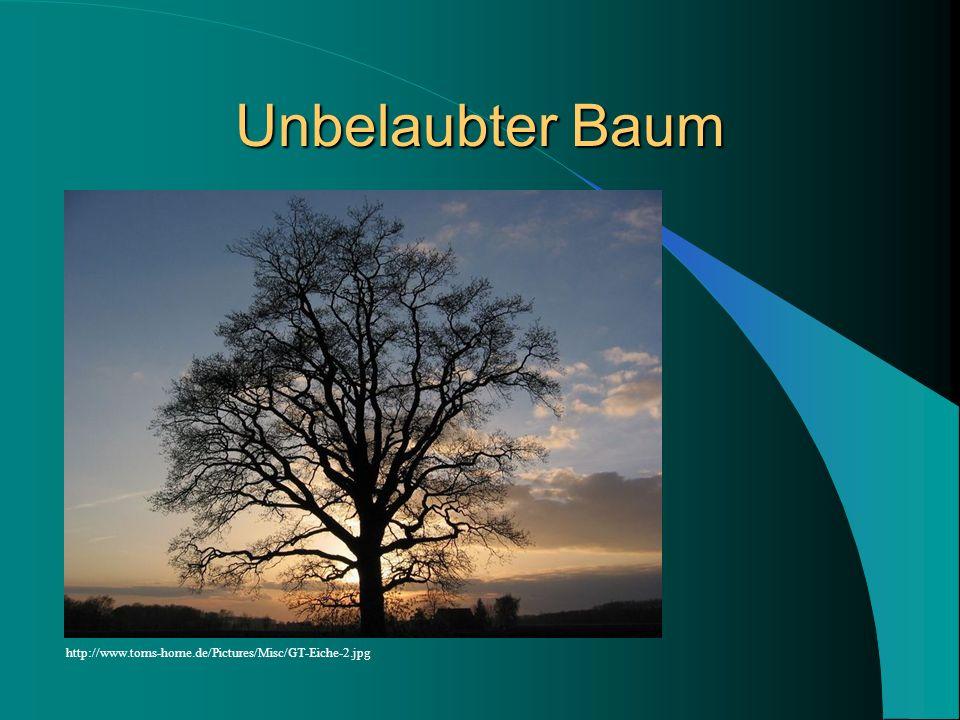 Unbelaubter Baum http://www.toms-home.de/Pictures/Misc/GT-Eiche-2.jpg