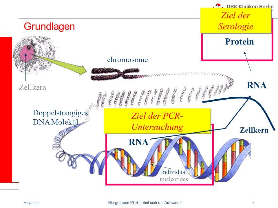 Grundlagen Ziel der Serologie Protein RNA Ziel der PCR-Untersuchung