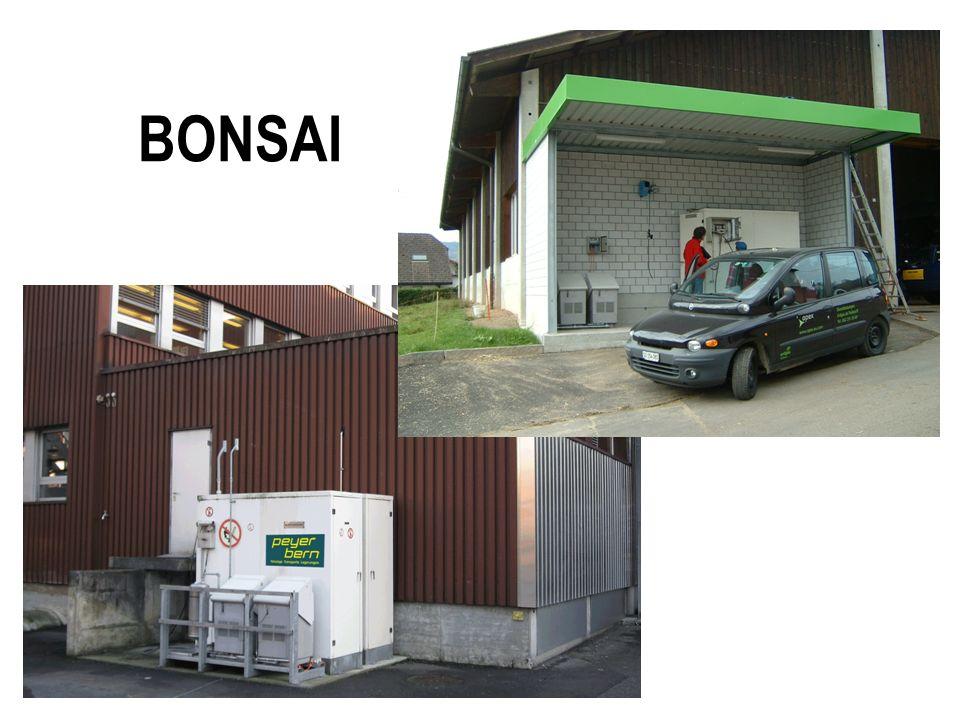 28.03.2017 BONSAI
