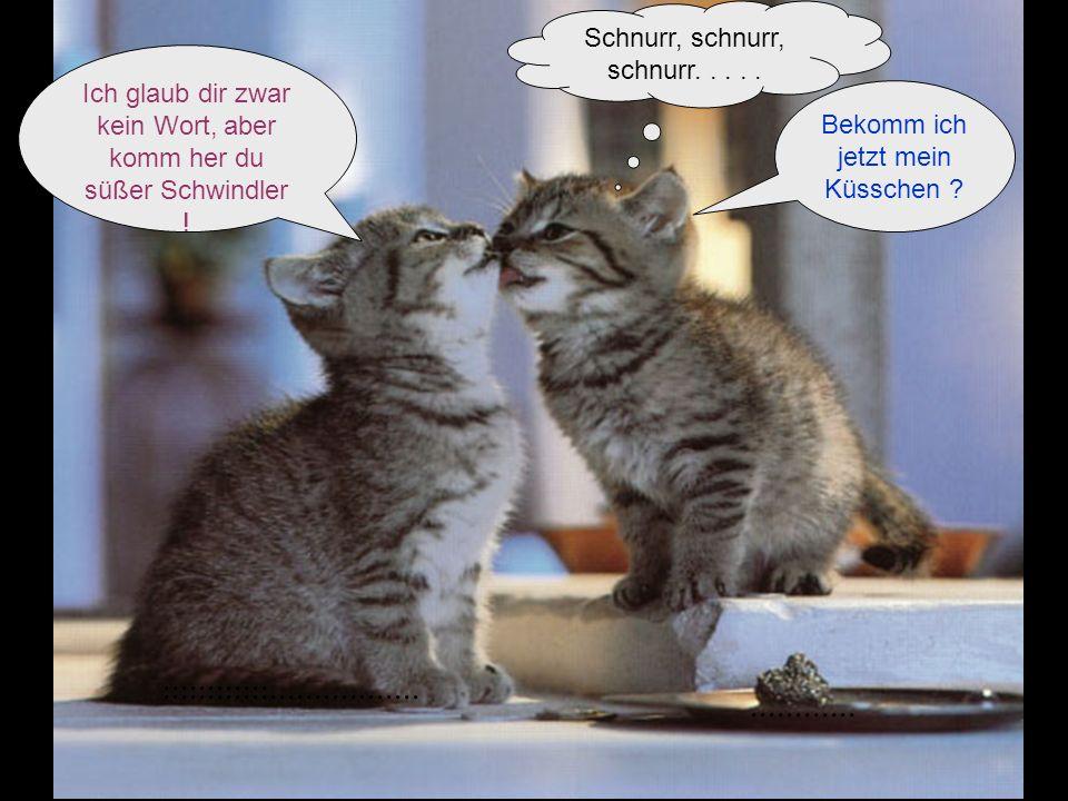 Download von PPSFun.de Schnurr, schnurr, schnurr. . . . . Ich glaub dir zwar kein Wort, aber komm her du süßer Schwindler !