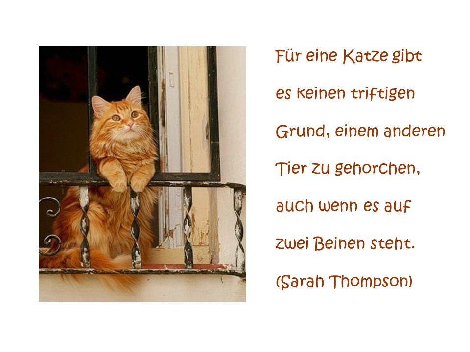 Für eine Katze gibtes keinen triftigen. Grund, einem anderen. Tier zu gehorchen, auch wenn es auf. zwei Beinen steht.