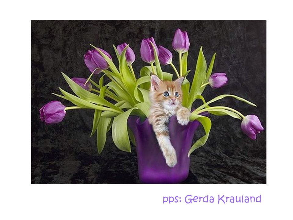 pps: Gerda Krauland