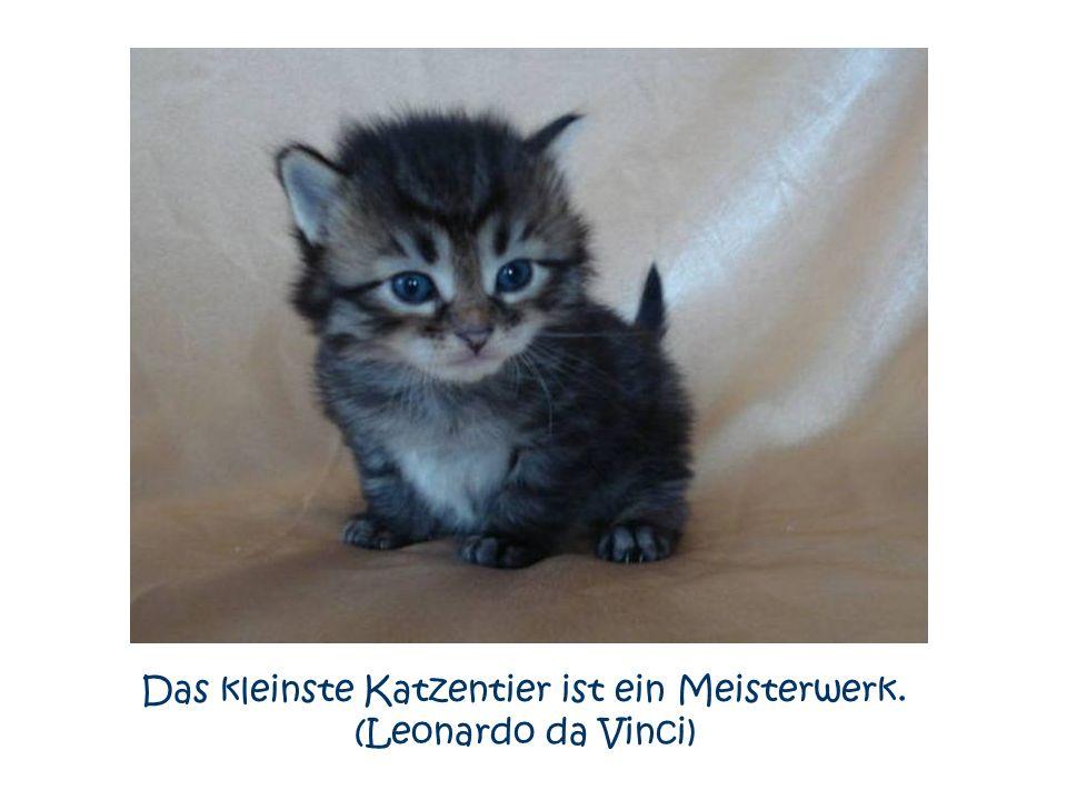 Das kleinste Katzentier ist ein Meisterwerk.