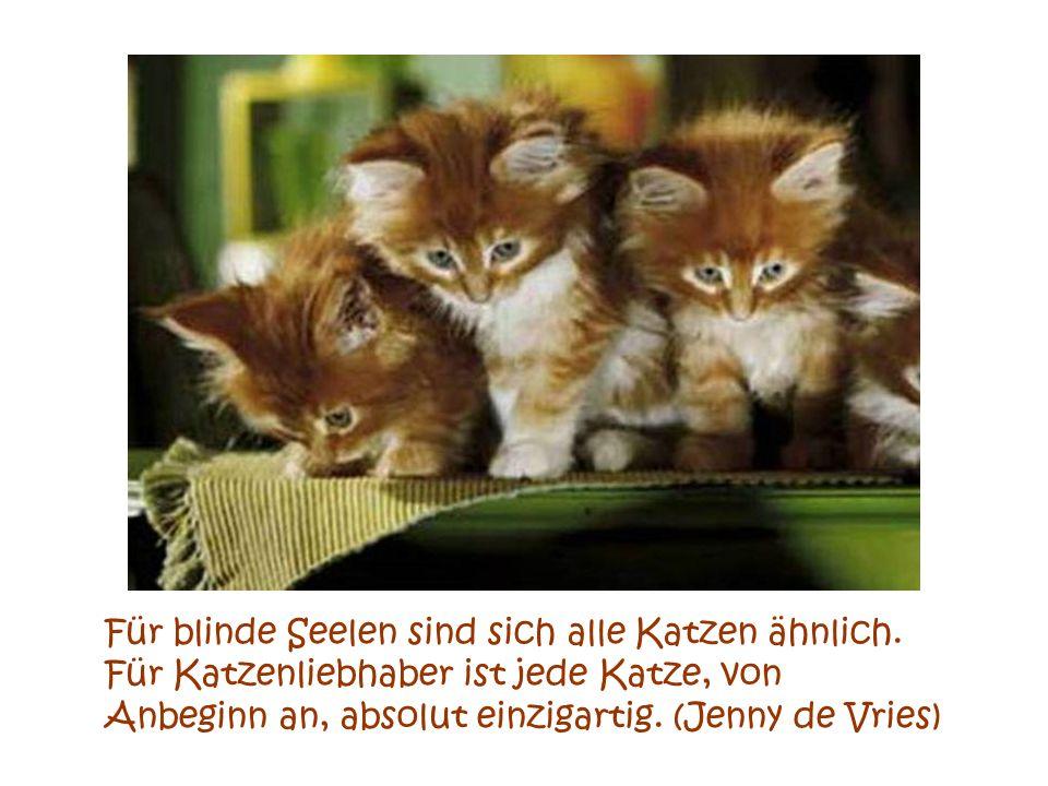 Für blinde Seelen sind sich alle Katzen ähnlich.