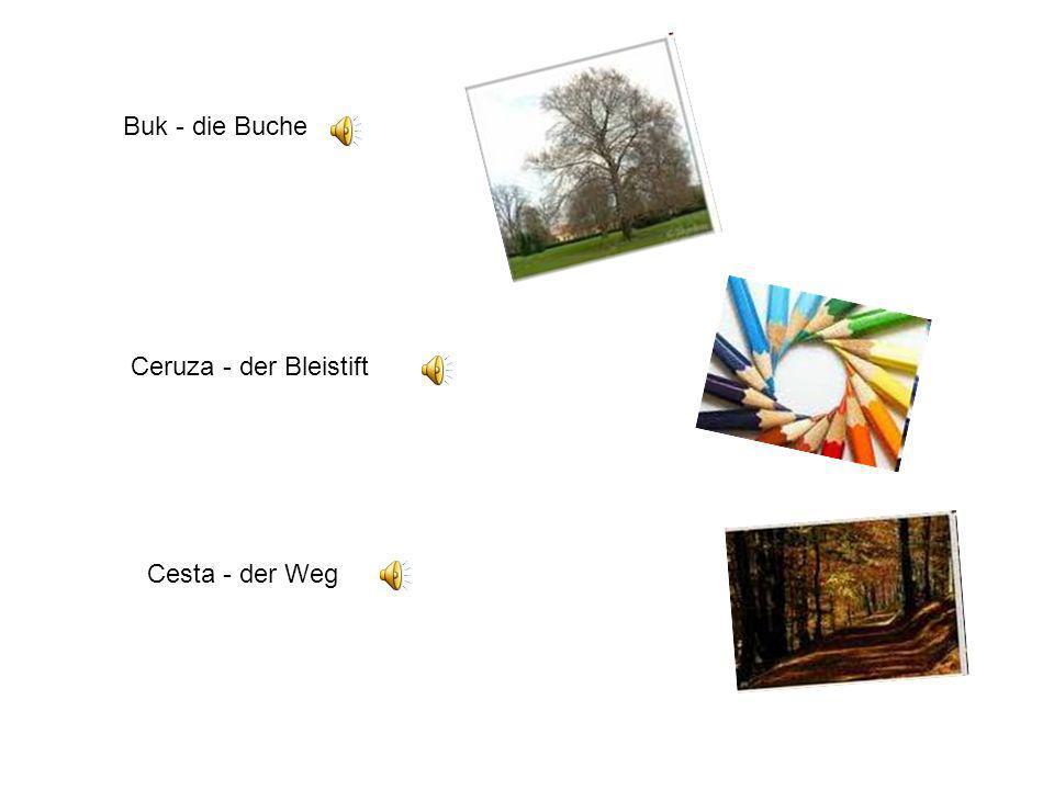 Buk - die Buche Ceruza - der Bleistift Cesta - der Weg