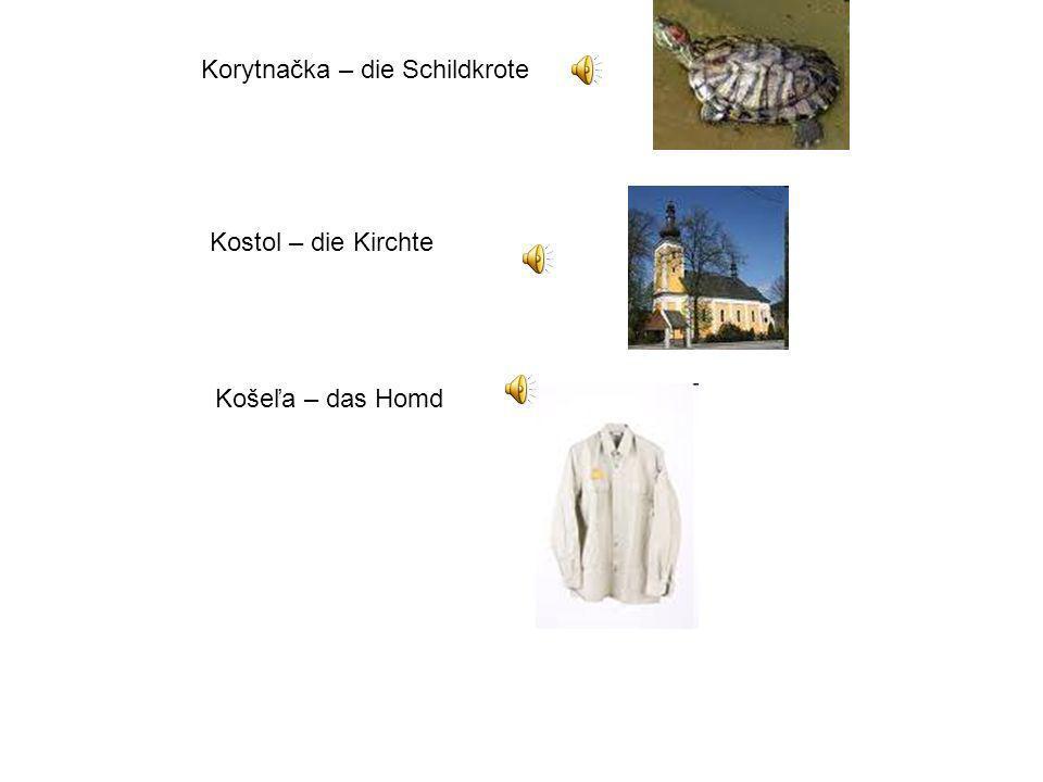 Korytnačka – die Schildkrote