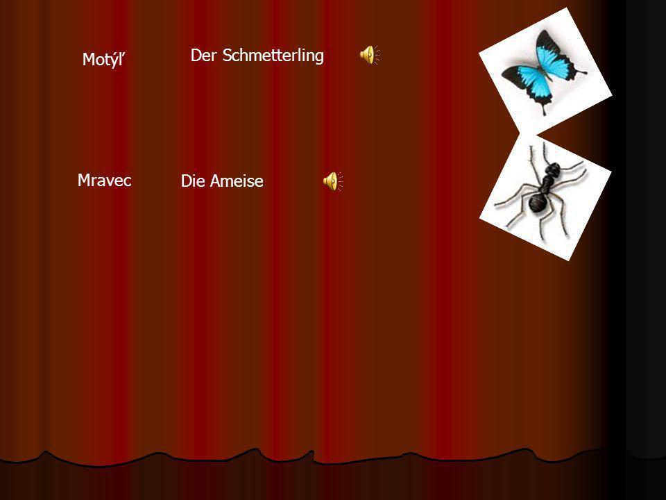 Der Schmetterling Motýľ Mravec Die Ameise