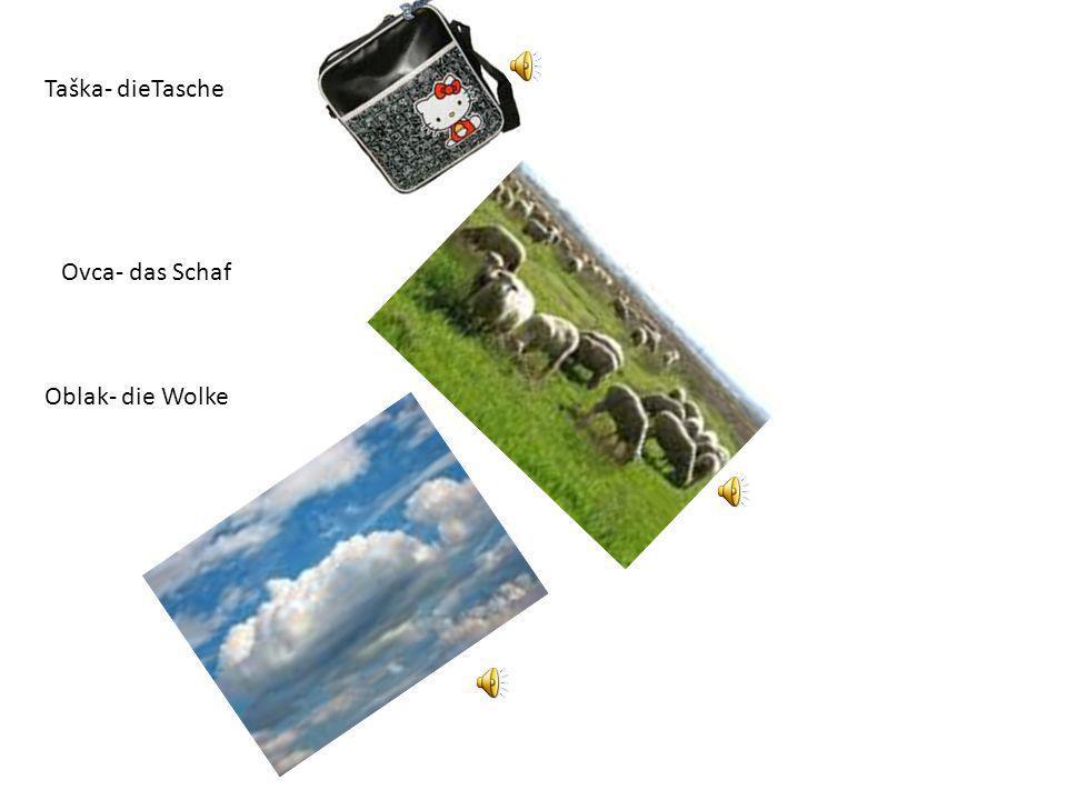 Taška- dieTasche Ovca- das Schaf Oblak- die Wolke