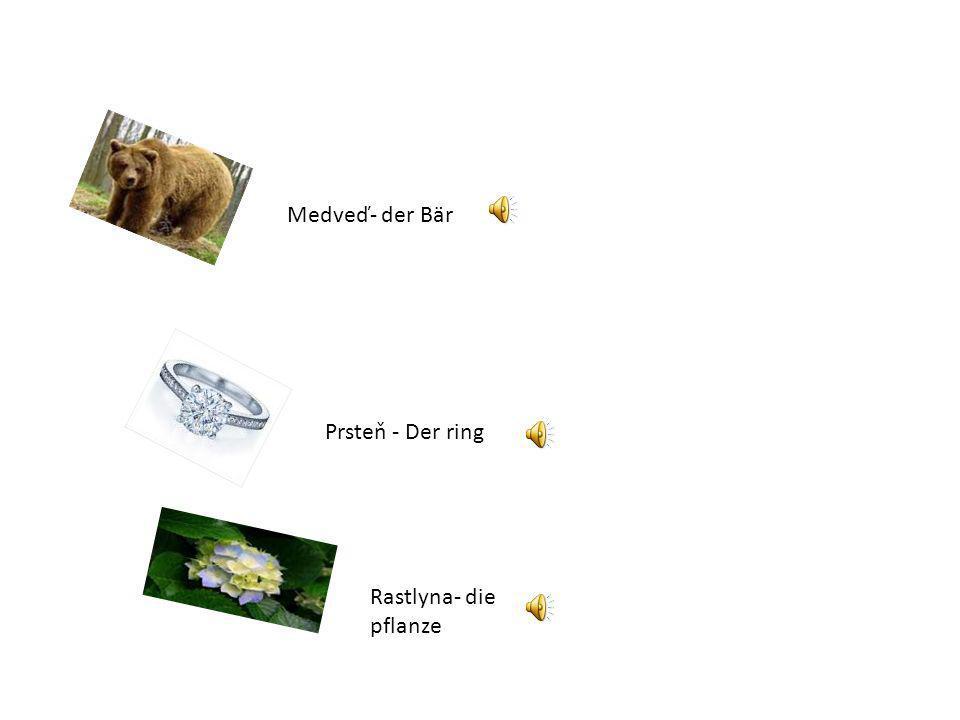 Medveď- der Bär Prsteň - Der ring Rastlyna- die pflanze