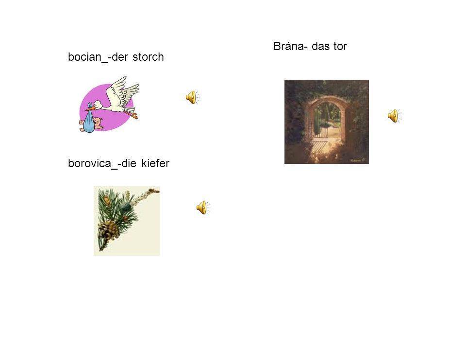 Brána- das tor bocian_-der storch borovica_-die kiefer
