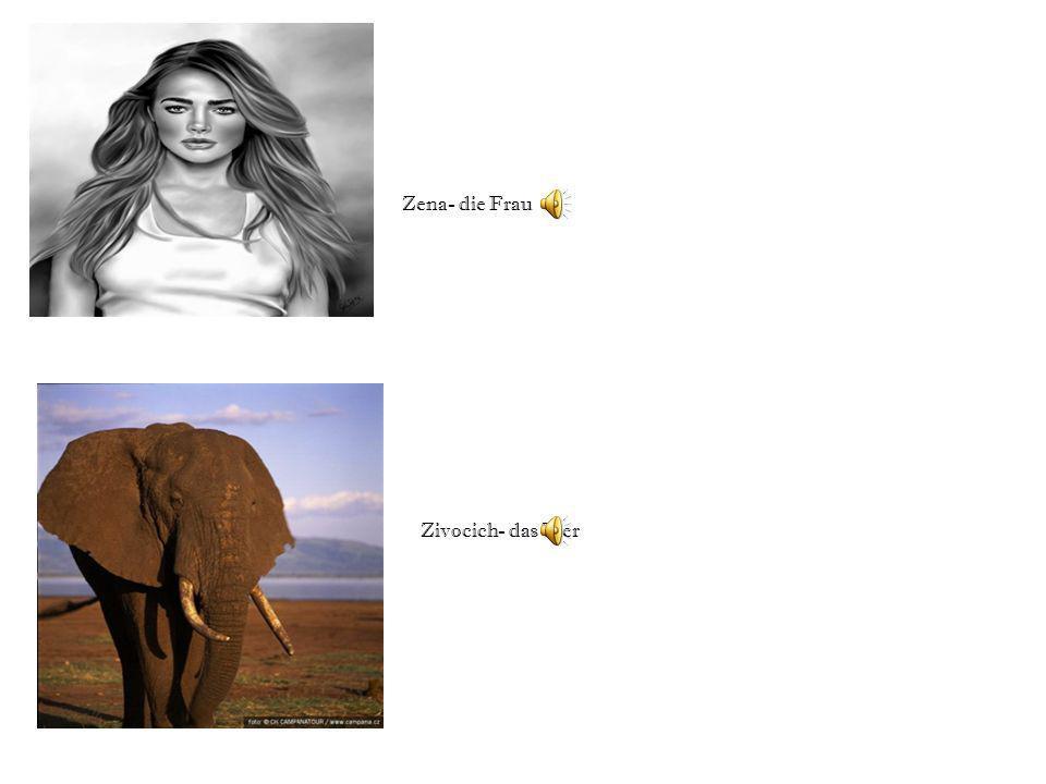 Zena- die Frau Zivocich- das Tier