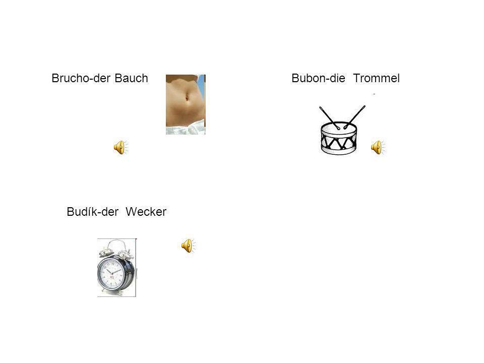 Brucho-der Bauch Bubon-die Trommel Budík-der Wecker