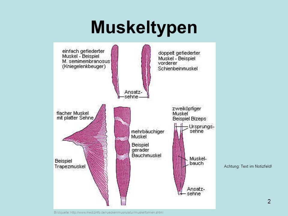 Muskeltypen ... von Markus Braun