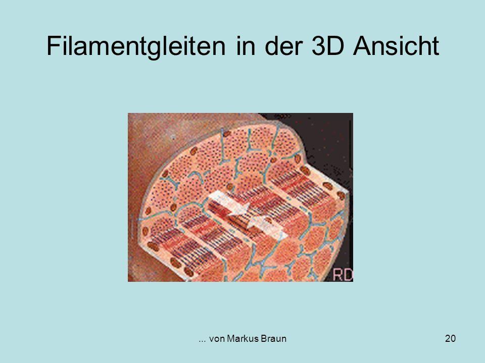 Filamentgleiten in der 3D Ansicht