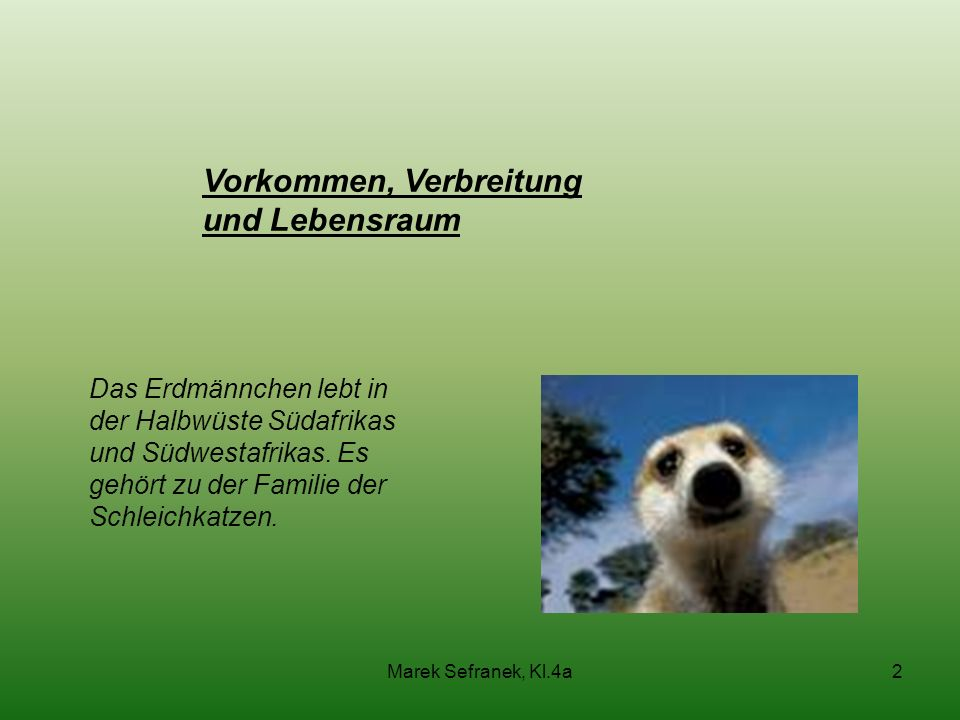 Vorkommen, Verbreitung und Lebensraum