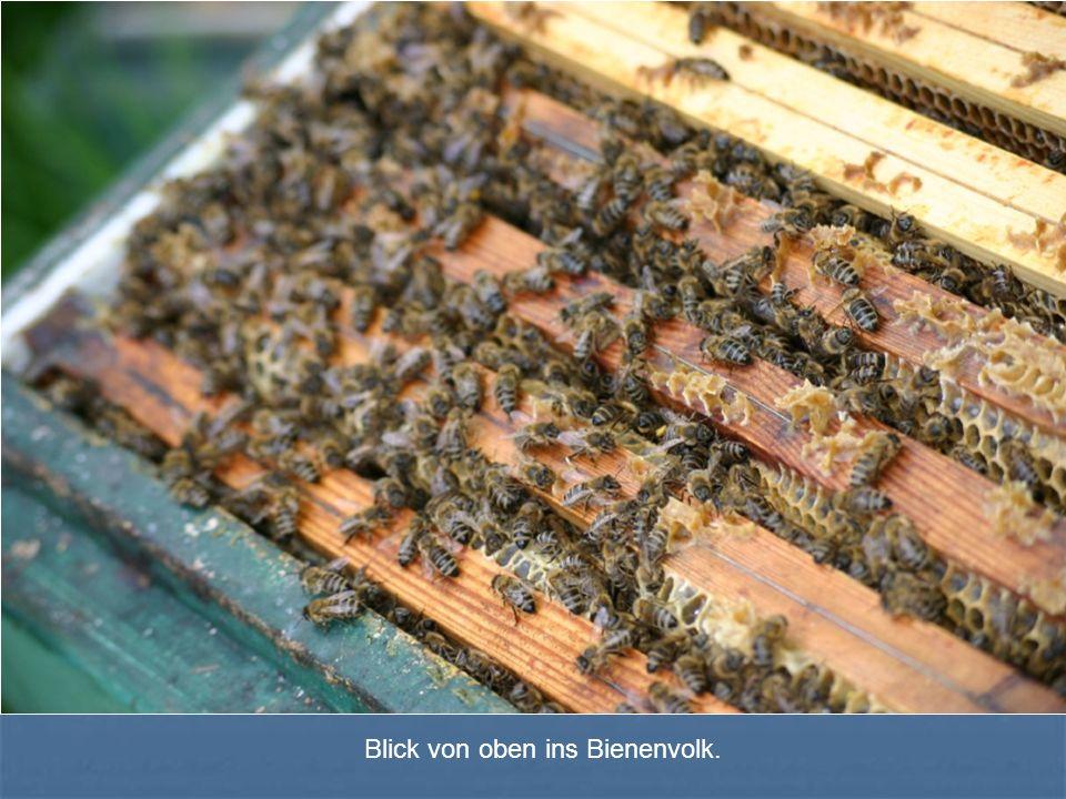 Blick von oben ins Bienenvolk.