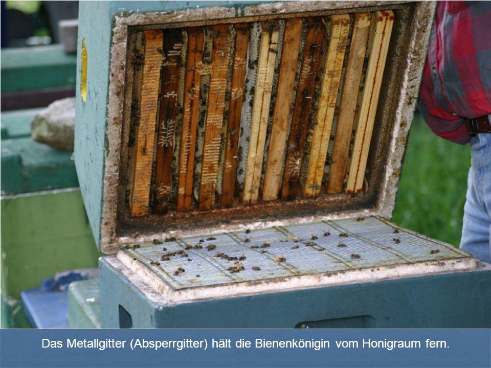 Das Metallgitter (Absperrgitter) hält die Bienenkönigin vom Honigraum fern.