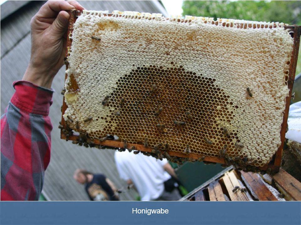 Honigwabe Honigwabe